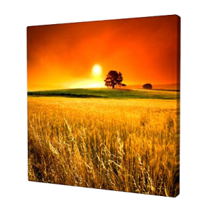 landscape 3 square